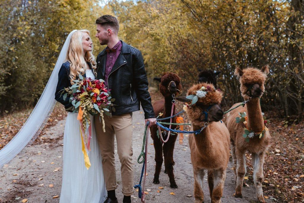 Hochzeitsfotos Mit Alpakas Adventure Alpakas